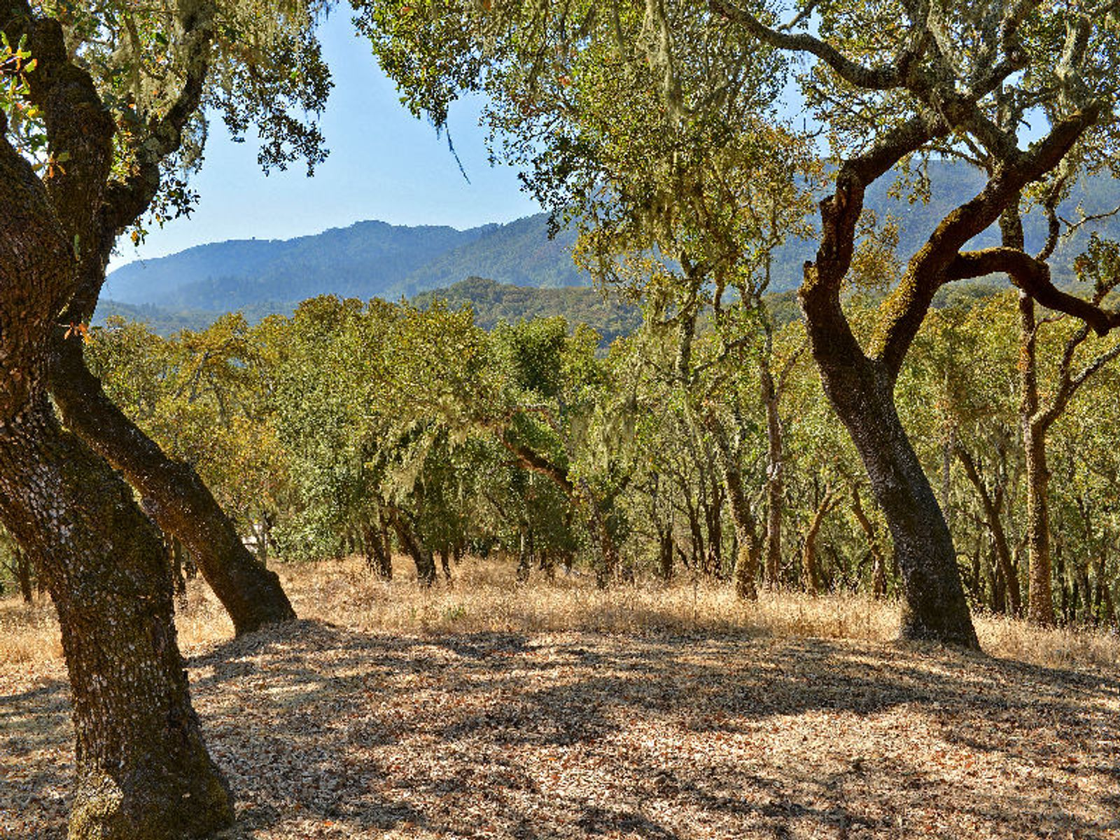 Views of Sonoma Mountain, Glen Ellen CA Single Family Home - Sonoma - Napa Real Estate