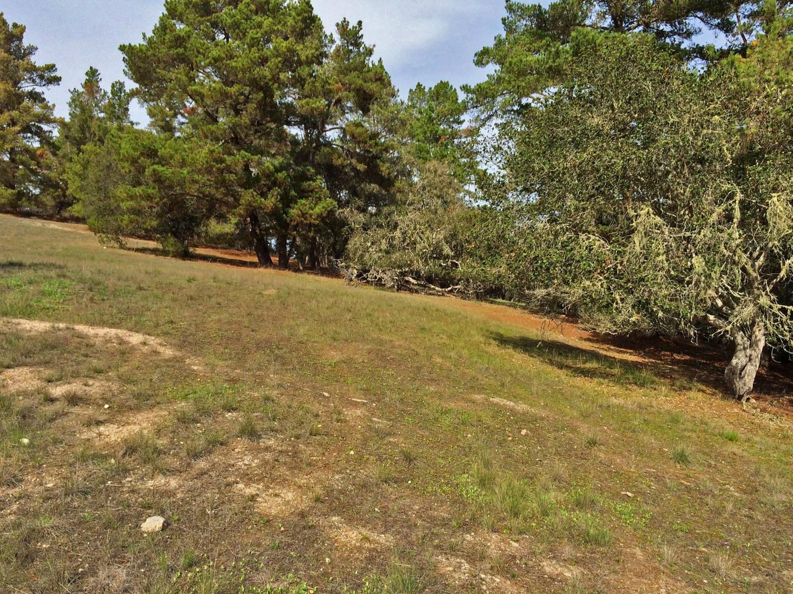 Country Homesite in Monterra