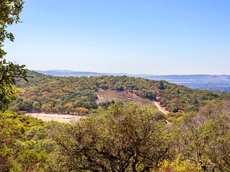 Beautiful 15 +/-  Acre Estate View Lot