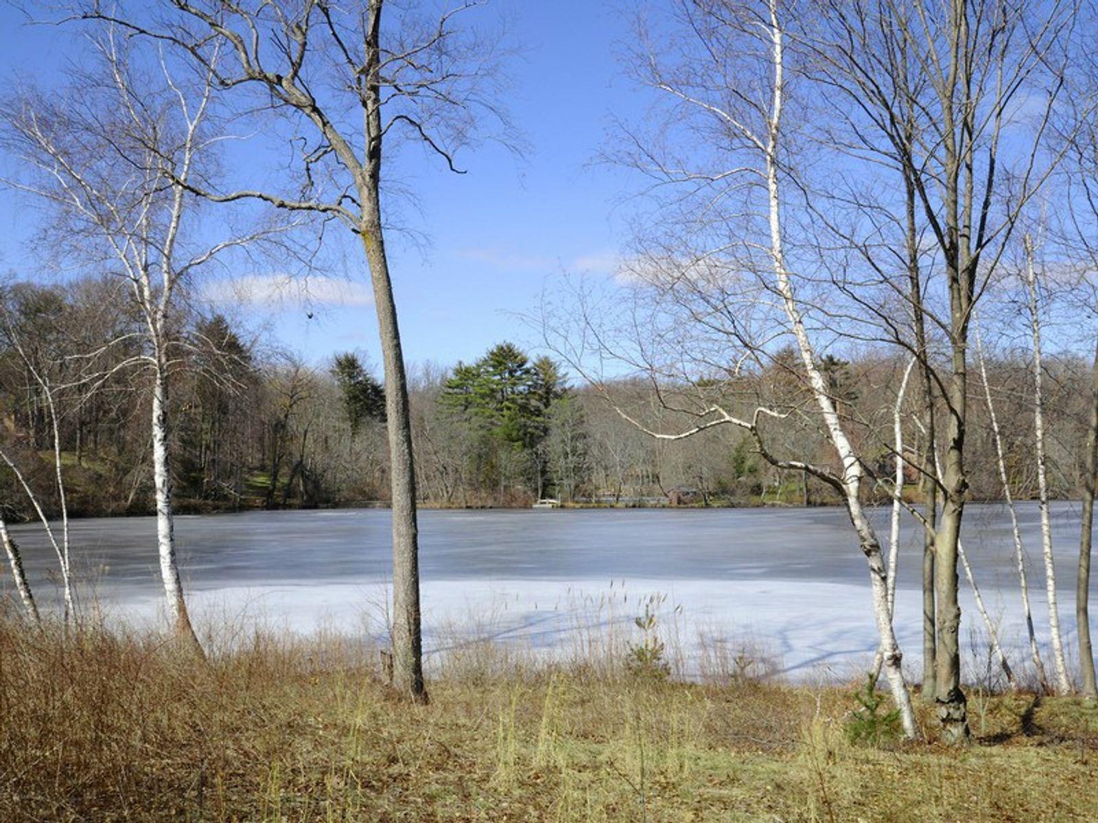 White Birch Point