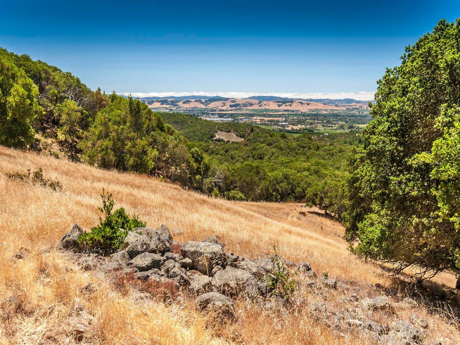 The Wilson Ranch