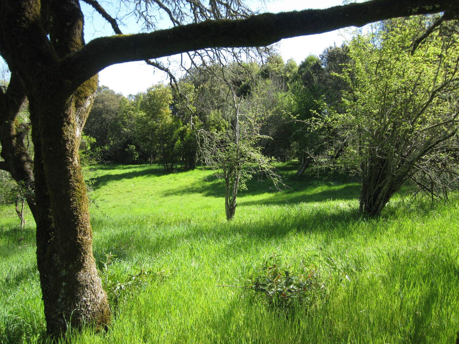 Gentle Oak Studded Parcel