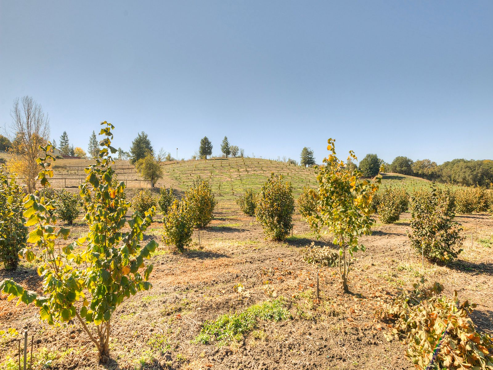 Creekside Setting