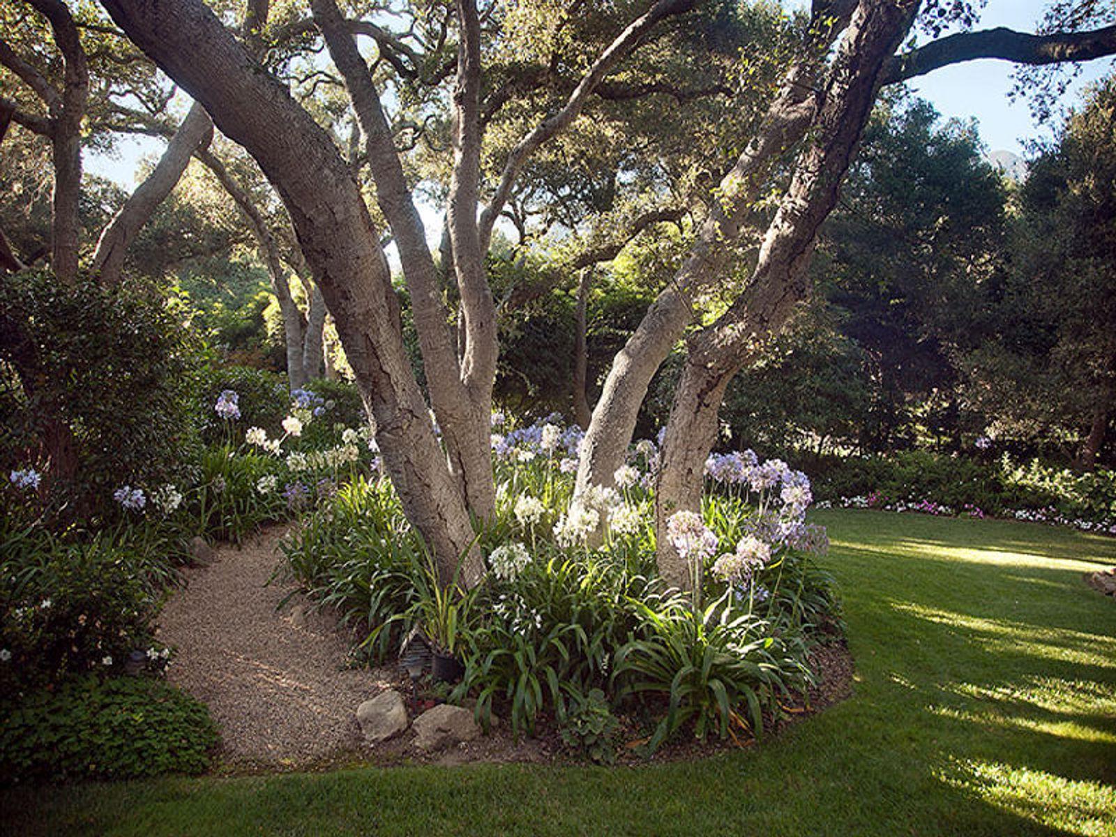 Tree and Yard