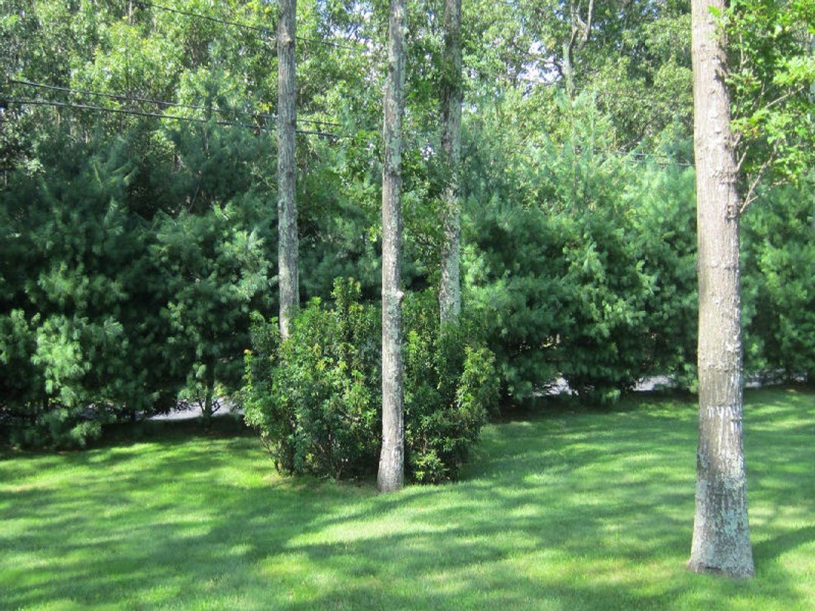 Equisite Landscapainting,